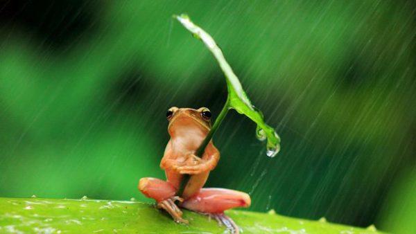 погода жабка