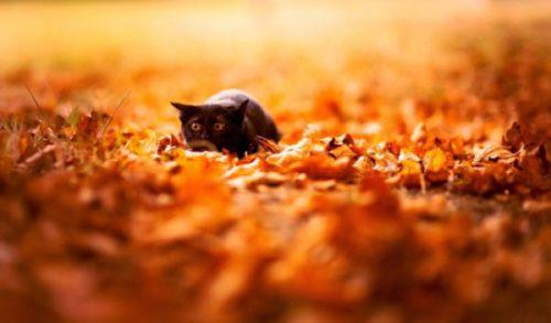 осінь і кіт