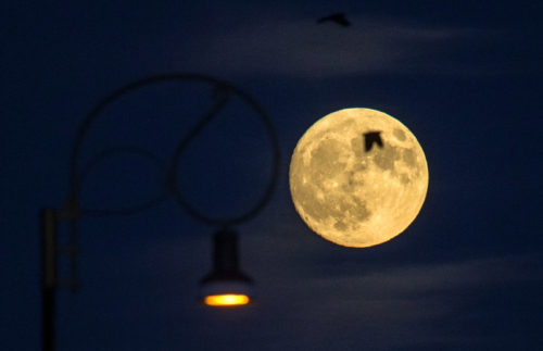 epa05630209 Birds fly in front of the rising moon in the sky over Skopje,  a day before the bigger and a brighter full moon phenomenon, when the moon will be closest to the earth since the past 70 years, in Skopje, Macedonia, 13 November 2016. The moon is expected to appear at its biggest and brightest since January 1948.  EPA/GEORGI LICOVSKI